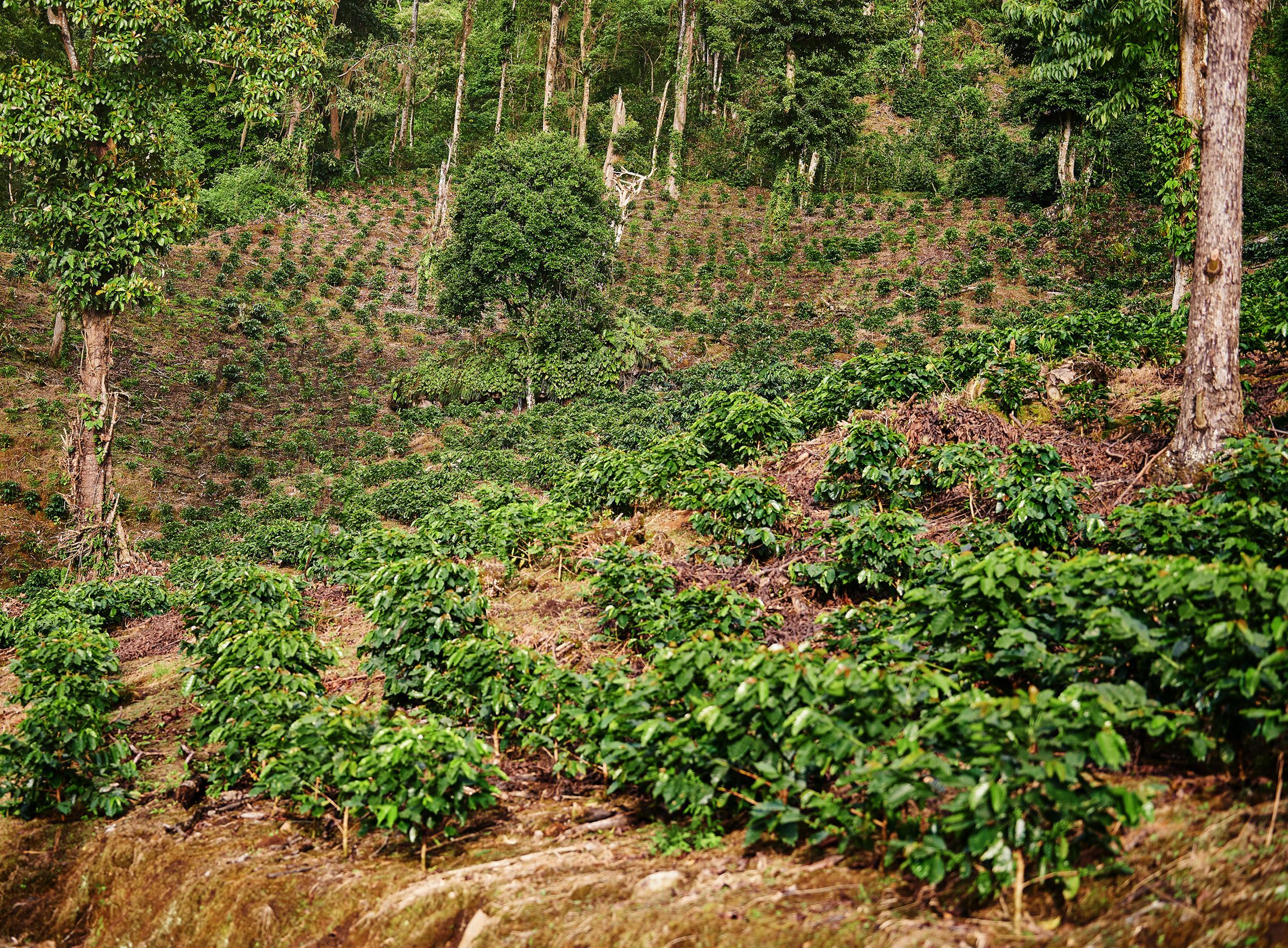 Estimando o Custo Ambiental - Barista Hustle 2